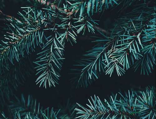 « Zero Waste » Holiday Season